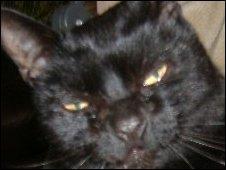 Missing cat Lionel