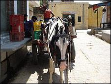 Horse outside Salim's house