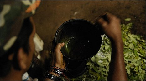 Colombian using coca leaves to produce cocaine