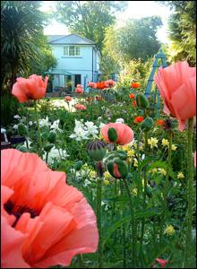 Liz Sakli took this lovely shot with her phone in her mother's garden in Croesyceiliog