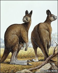 Giant roo depiction (NHM)