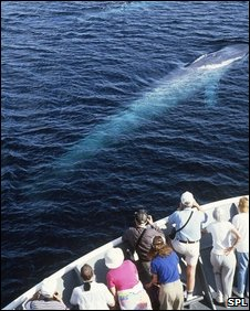 Whale watchers (SPL)