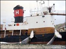 Icelandic whaling boat (AFP)