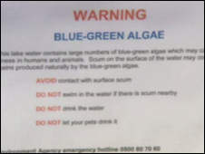 Notice warning of blue-green algae