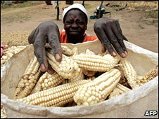 Zimbabwean woman puts maize into a bag in Domboshawa on 23 April 2008