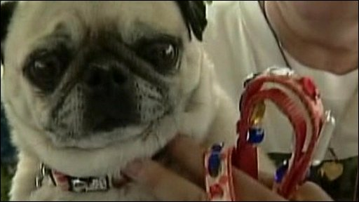 Entrant in world's ugliest dog contest