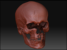A reconstruction of the skull