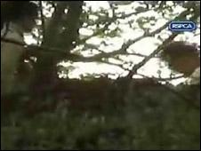 RSPCA cameras record the offences