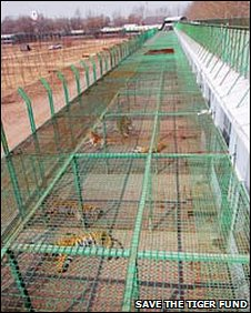 Cages at a tiger farm (Save the Tiger Fund)