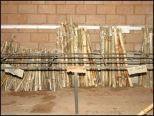 Racks of bamboo