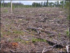 A clearcut