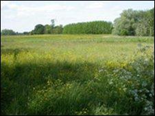 Lower Derwent Valley nature reserve.