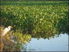 Bird in the Pantanal