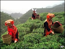Ethnic Yao women pick tea in Guangxi Zhuang Autonomous Region, southern China - 2002