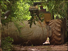 Tractor pulling a tree trunk (Image: BBC)