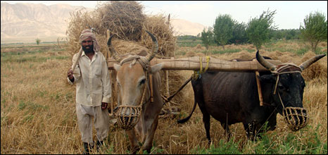 Farmer in Kunduz
