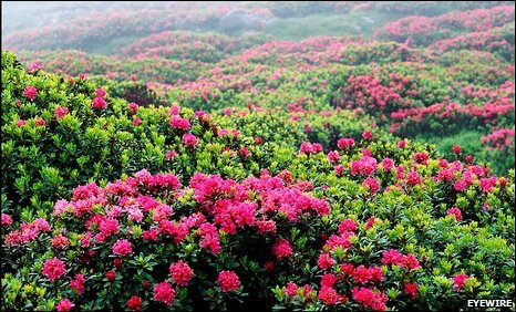 Misty field of flowers