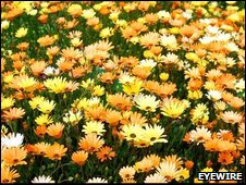 Bright field of flowers