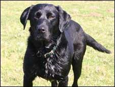 Missing dog Simon