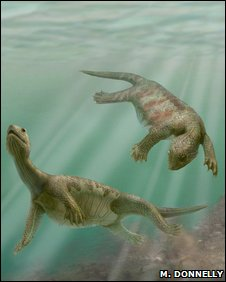 Artist's impression of ancient turtle