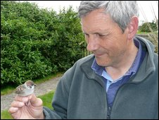 Alan with Tree Sparrow nestling