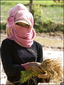 A Cambodian farmer
