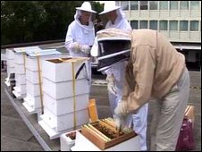 Bees on the rooftop at the Royal Lancaster Hotel