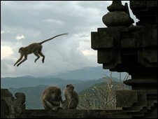 Monkeys at a temple