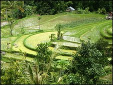 The Jati Luwih rice terraces