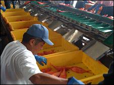 fish processing, Japan