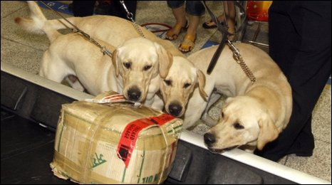 Cloned sniffer dogs at Seoul's Incheon International Airport on July 17