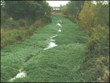 An example of floating pennywort in the Norfolk Broads