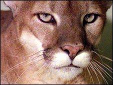 Puma - generic