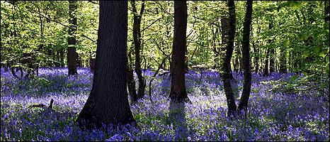 British woodland (Image: BBC)