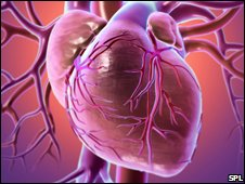 'New way' to repair heart damage