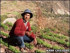 18-year-old Rogelio Churqui Quispe from Khapi tends his plot of parsley. Photo: Mark Chilvers