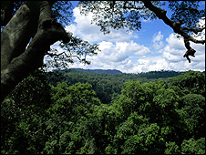 Jungle (Image: BBC)