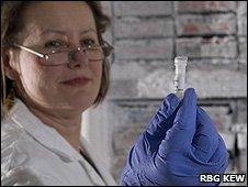 Scientist holding a vial of plant DNA (Image: Royal Botanic Gardens, Kew)