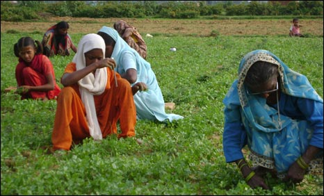 Women work in a field in Jharkhand