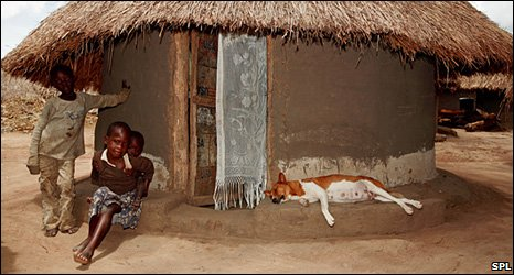 Dog in Ugandan village (SPL)