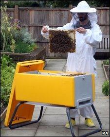 A modern beehive