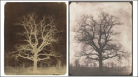 An oak tree in winter, c.1842-43. Image: William Fox Talbot.