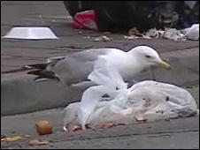 Seagull in Cardiff