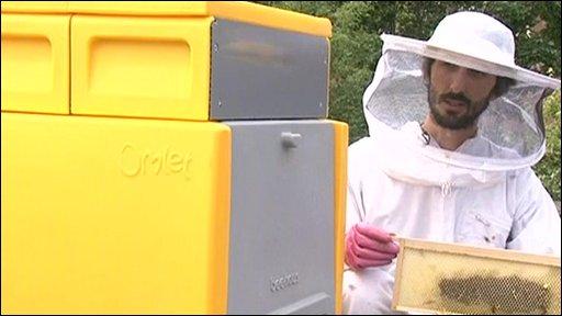 Beekeeper Johannes Paul