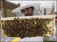 A colony of honeybees