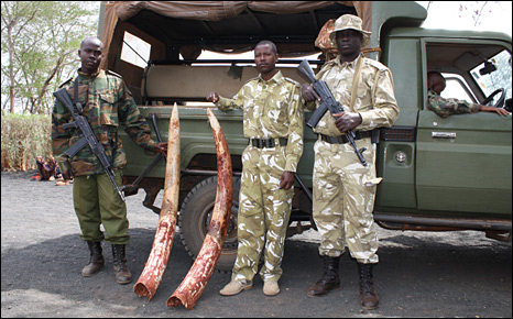 Kenya Wildlife Service with tusks (BBC)