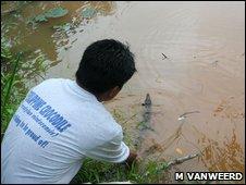 Release of a juvenile Philippine crocodile (Crocodylus mindorensis)