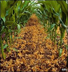 GM Crops (SPL)