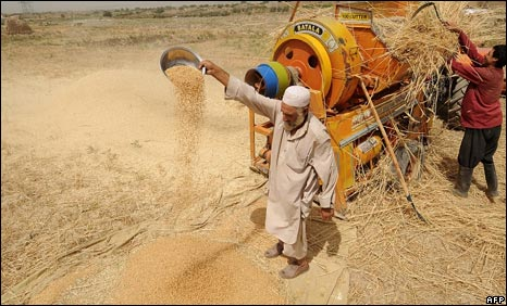 Afghan farmers harvest their wheat crop north of Kabul on July 8, 2009