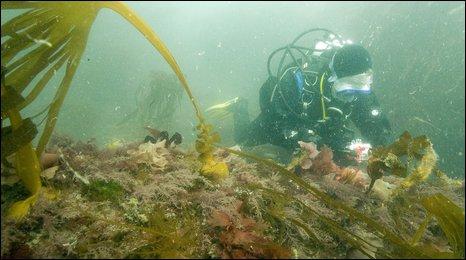 Dorset Seasearch diver